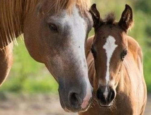 Treffen der Profis im und um den Pferdesport