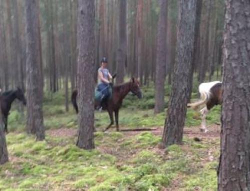 Das Glück der Erde liegt nicht nur auf dem Rücken der Pferde